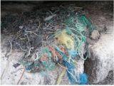 """Protocole : Indicateur """" macrodéchets """"  dans les nids des cormorans huppés"""