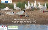 Bilan : Suivi 2018 de la reproduction des Laro-limicoles coloniaux en Méditerrannée