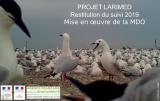 Bilan : Suivi 2019 de la reproduction des Laro-limicoles coloniaux en Méditerrannée