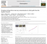 Article : 2020_ Foraging ecology drives mercury contamination in chick gulls from the English Channel